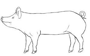 Как правильно резать свинью