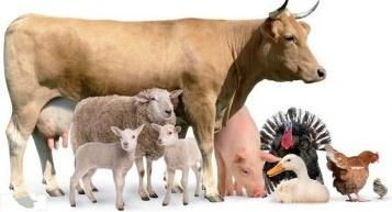 , Кормление сельскохозяйственных животных в зимний период