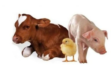 , Основы выращивания поросят отъемышей на с/х продукции от «ТД Кругловъ»